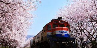 鎮海櫻花季-慶和火車站