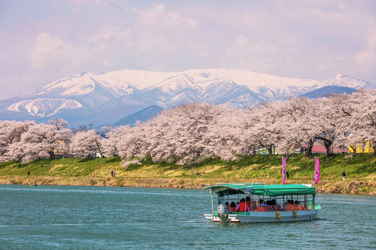 ▲日本宮城花見屋形船。(圖/Tripbaa趣吧!達人帶路)