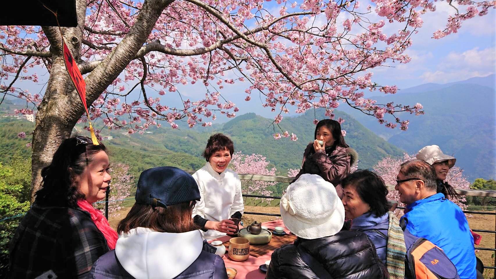 全台櫻花季賞櫻景點推薦-阿里山櫻花季。