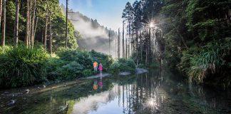 阿溪縱走路線景點-水漾森林