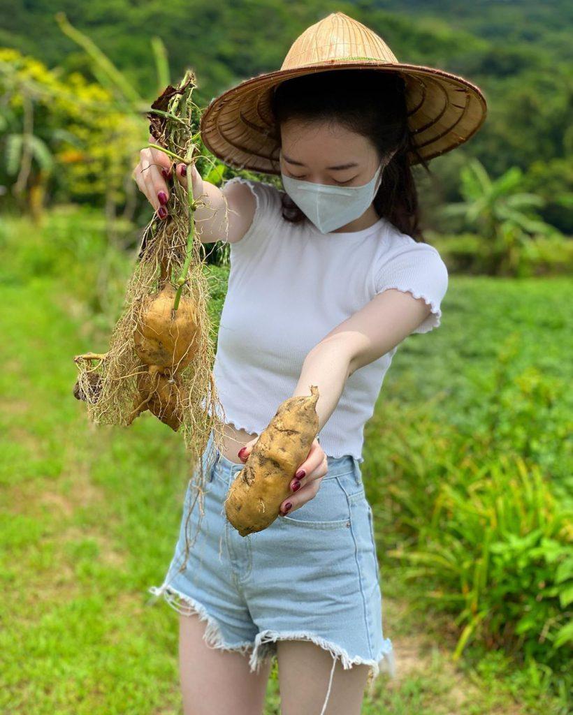 農產品-金山採地瓜