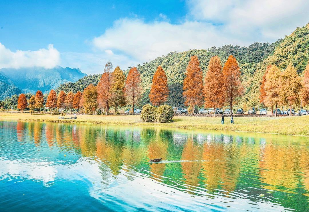 太平山山毛櫸步道附近景點-蜊埤湖落羽松