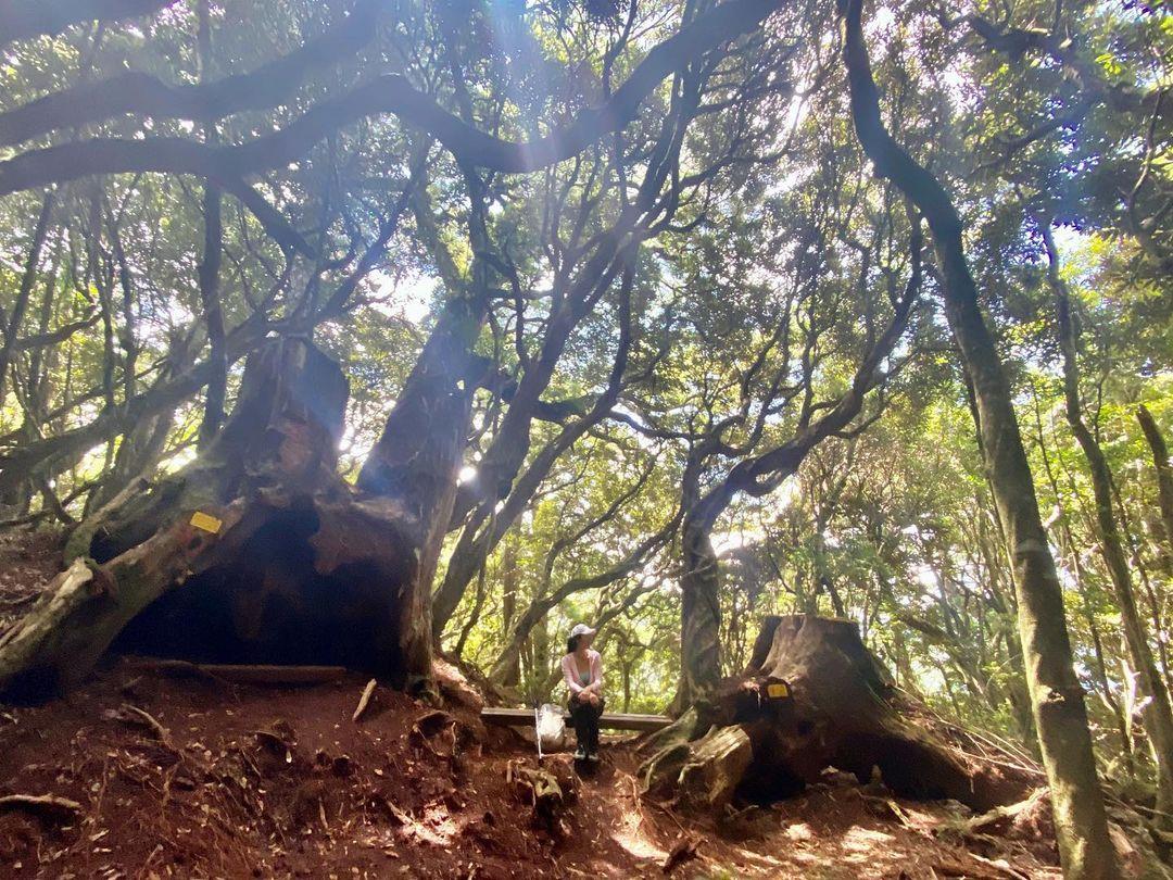 塔曼山登山步道
